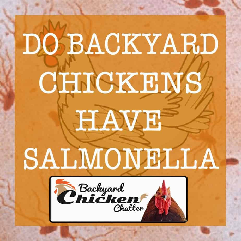 Do-Backyard-Chickens-have-Salmonella-