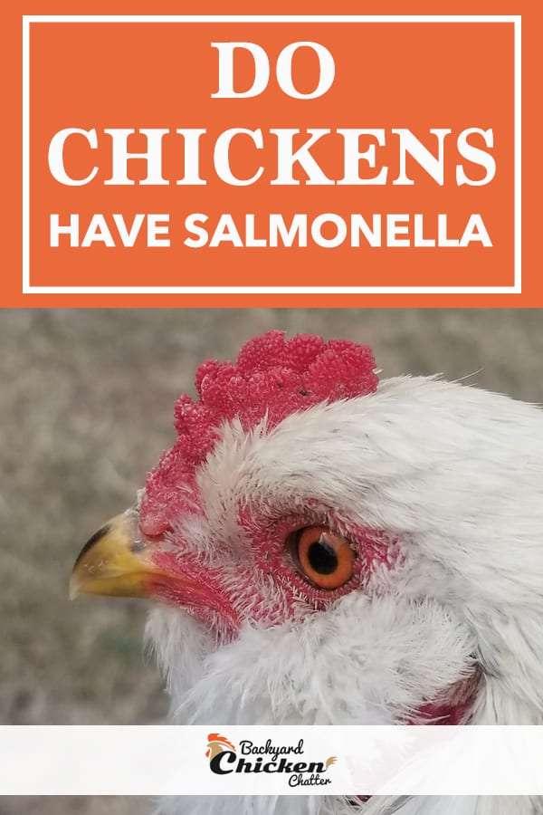 Do Backyard Chickens have Salmonella?