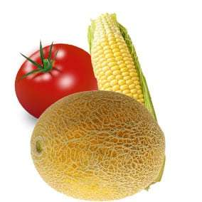 Tomatoes, Sweet Corn and Cantaloups