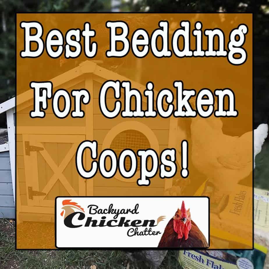 Best Bedding for Chicken Coops