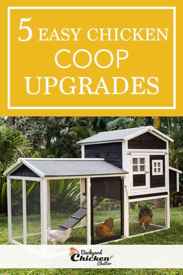 5 Easy Chicken Coop Upgrades