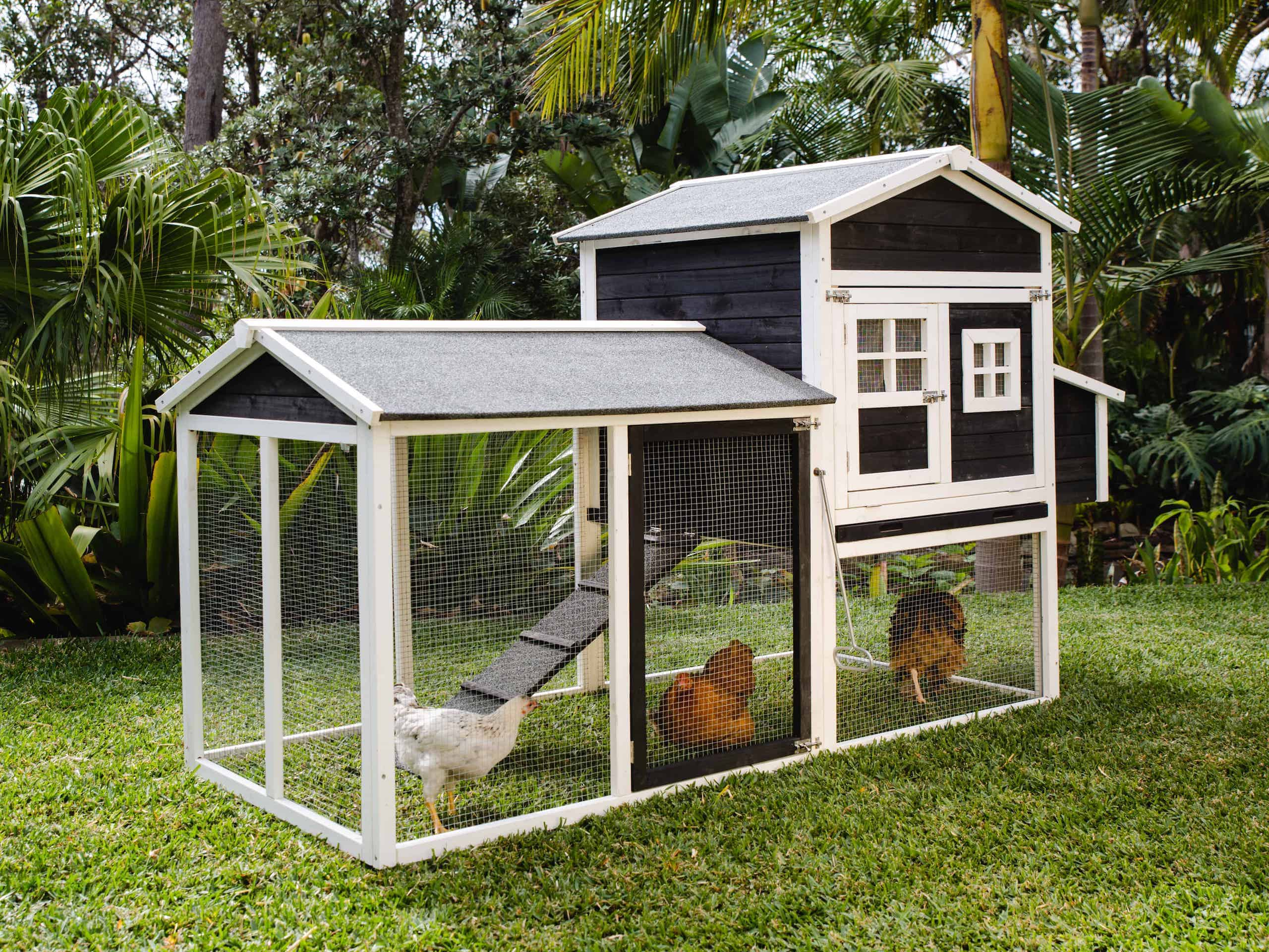 6 Reasons Why A Chicken Coop And Run