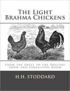 The Light Brahma Chickens