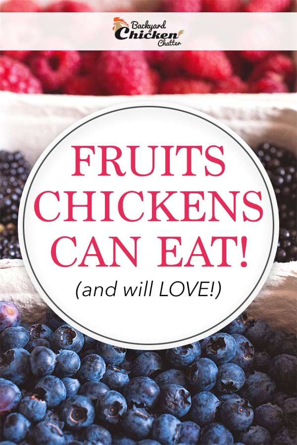 The BEST Fruits for Chickens to Eat that they will LOVE - Pinterest Ideas and Inspiration