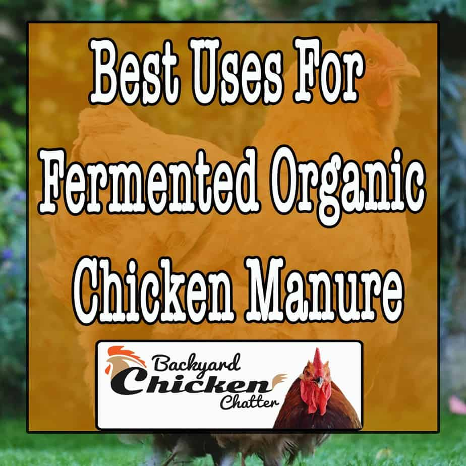 Best-uses-for-fermented-organic-chicken-manure