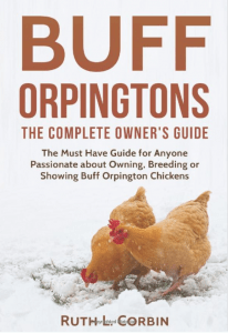 Buff Orpingtons - The Complete Owners Guide