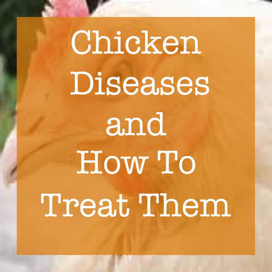 chicken diseases and how to treat them