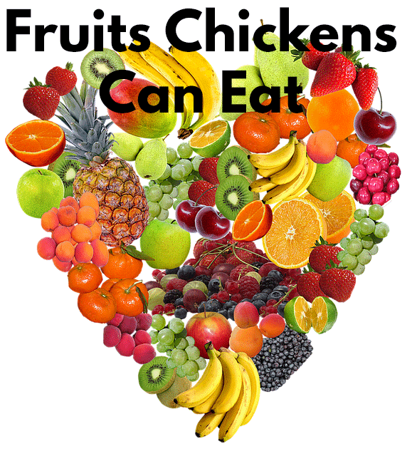 fruits that Chickens Can eat