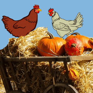 Fruits-that-chickens-eat