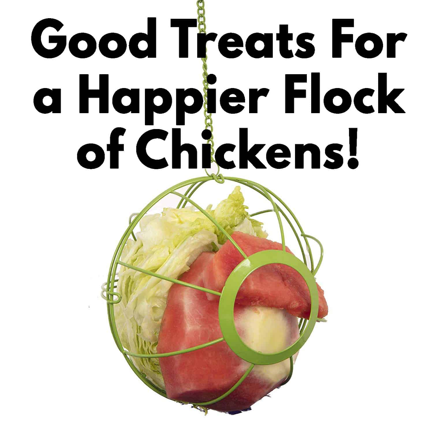 Good Treats For a Happier Flock of Chickens!