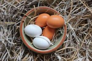 Top Reasons Why Hens Lay Soft-Shelled Eggs!