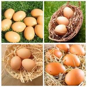 YunKo 6Pcs Wooden Faux Fake Nest Eggs