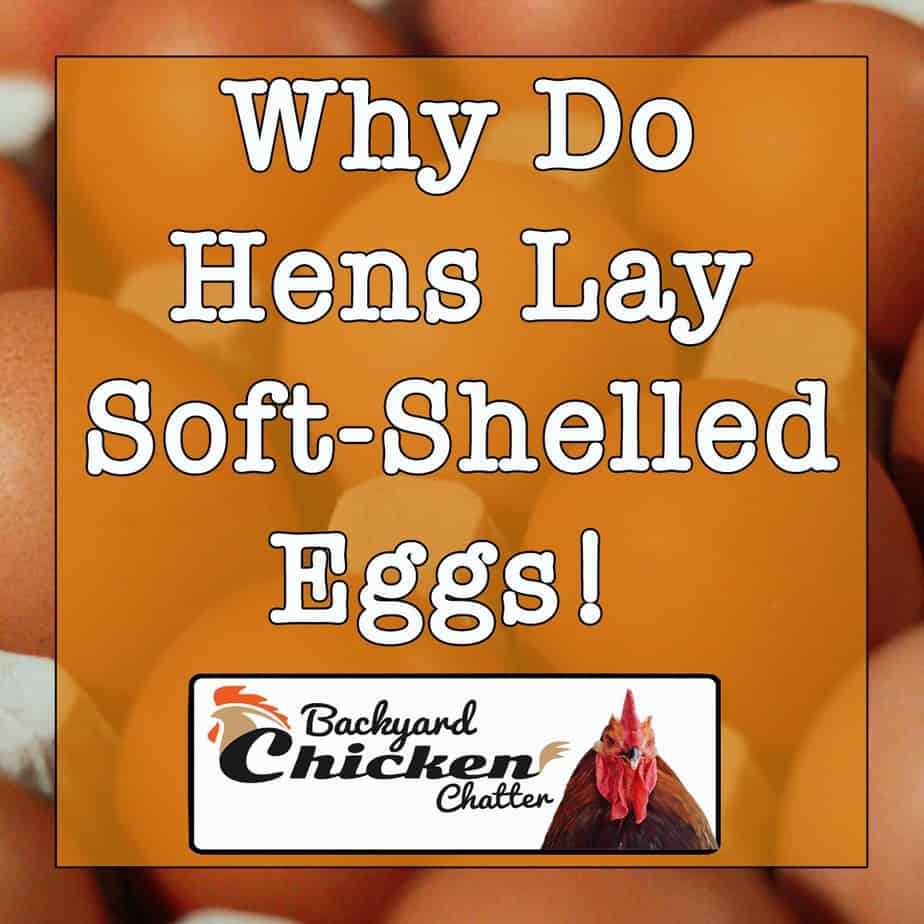 why-do-hens-lay-soft-shelled-eggs