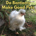 Do Bantams Make Good Pets