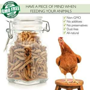 PICKY NEB 100% Non-GMO Dried Mealworms