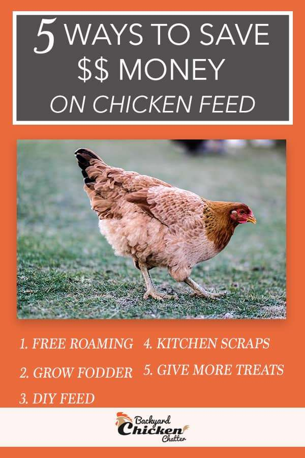 Best Ways to Save Money on Chicken Feed and Treats Pinterest ideas