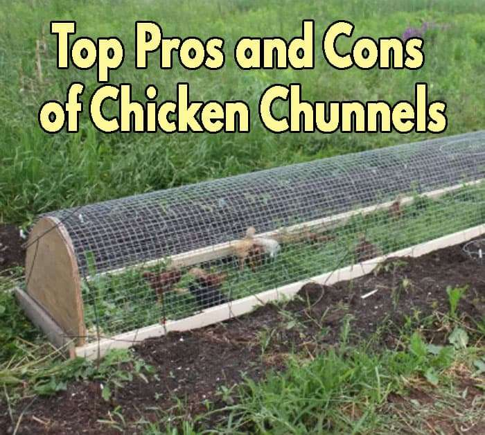 Top Pros and Cons of Chicken Chunnels