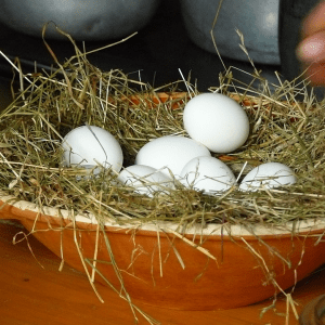 Why Did My Hens Stop Laying Eggs?