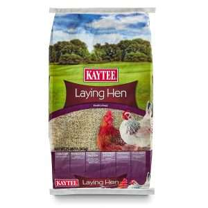 feed to help chickens lay more eggs