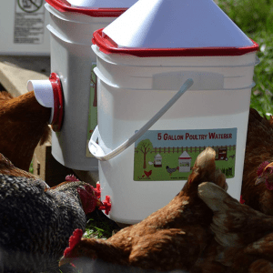 5 Gallon Chicken Waterer - Horizontal Side Mount Poultry Nipples