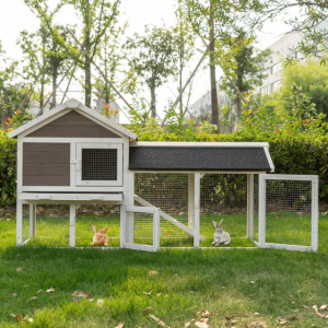 Hen Duck Coop House with Removable Tray Ramp Shelter