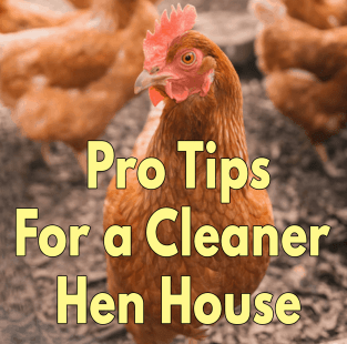 Pro Tips For a Cleaner Hen House