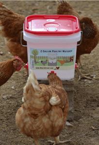 2 Gallon Chicken Waterer - Horizontal Nipple Setup (4 Nipple)