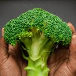 Do Chicken eat broccoli?