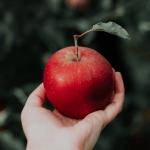Do Chicken eat apples?
