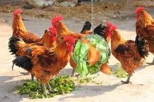 Chicken Treat Ball