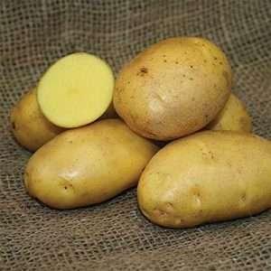 SEED POTATOES - 1 lb German Butterball