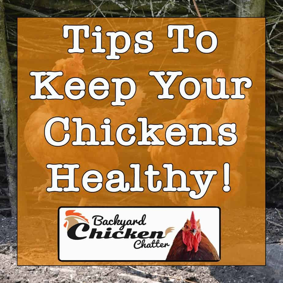Tips-to-keep-your-chickens-healthy