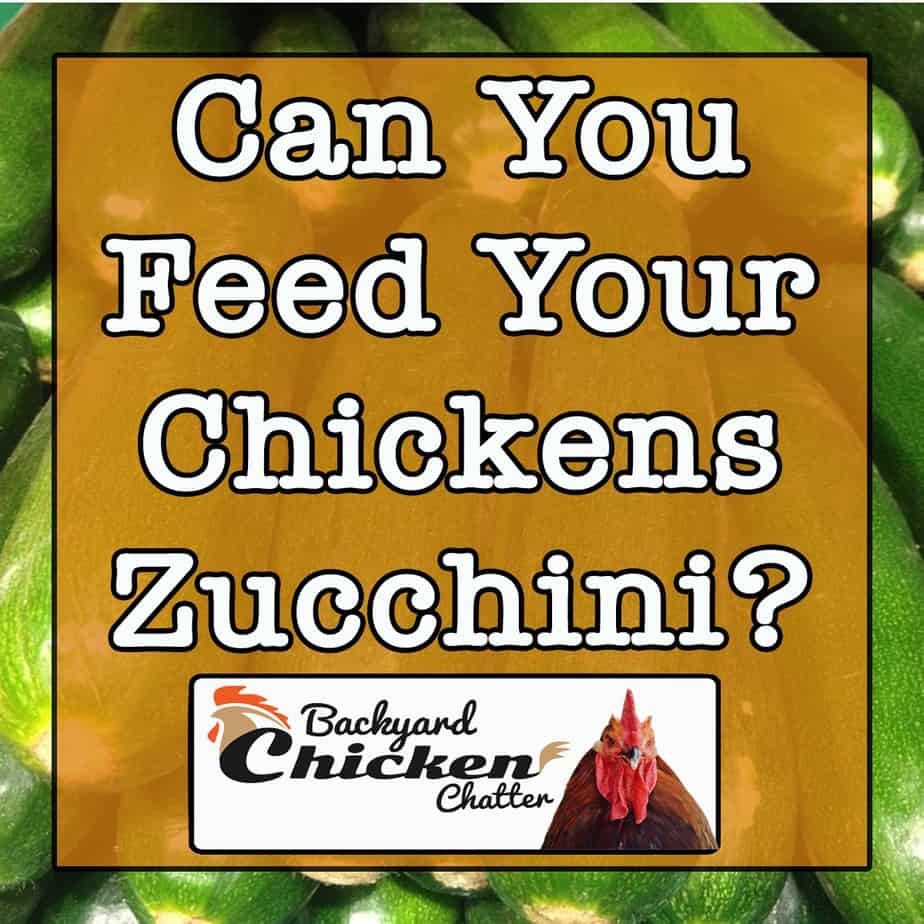 can you feed your chickens Zucchini
