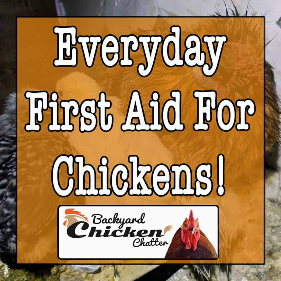 Everyday First Aid For Chickens