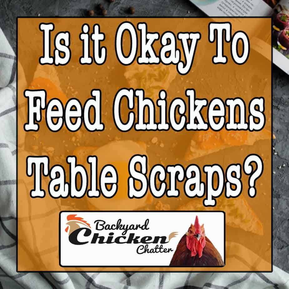 Is it OK to Feed Chickens Table Scraps?