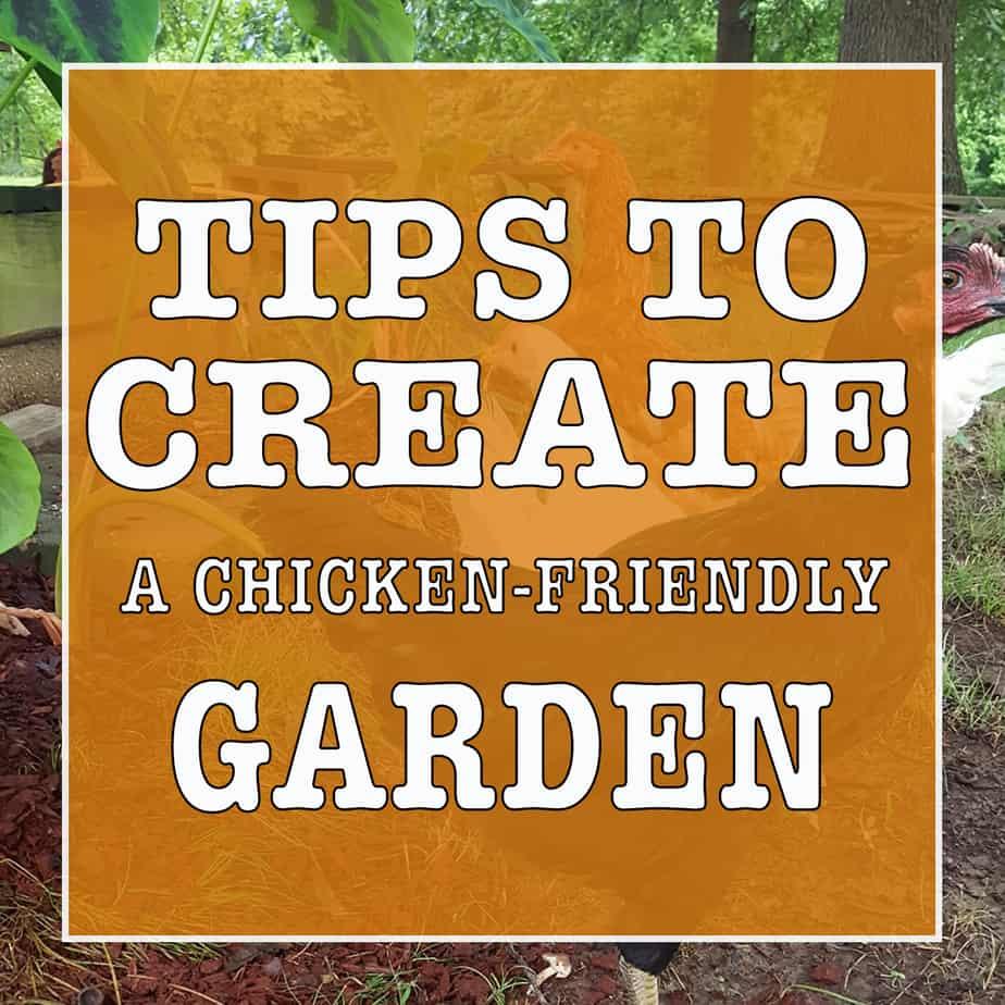 Tips to create a chicken friendly garden
