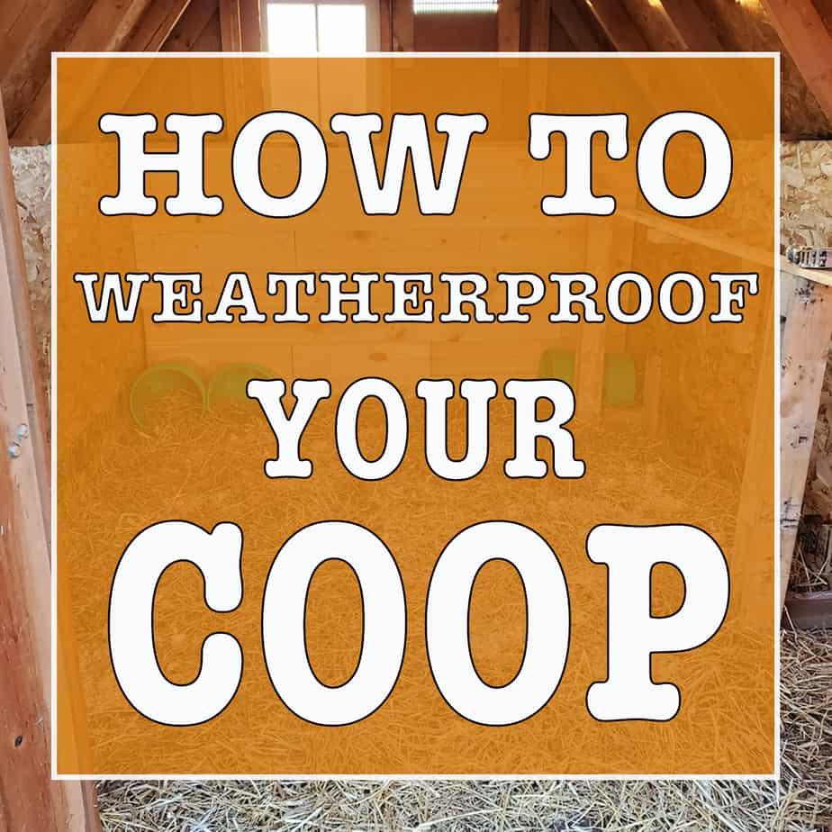 how to weatherproof your chicken coop