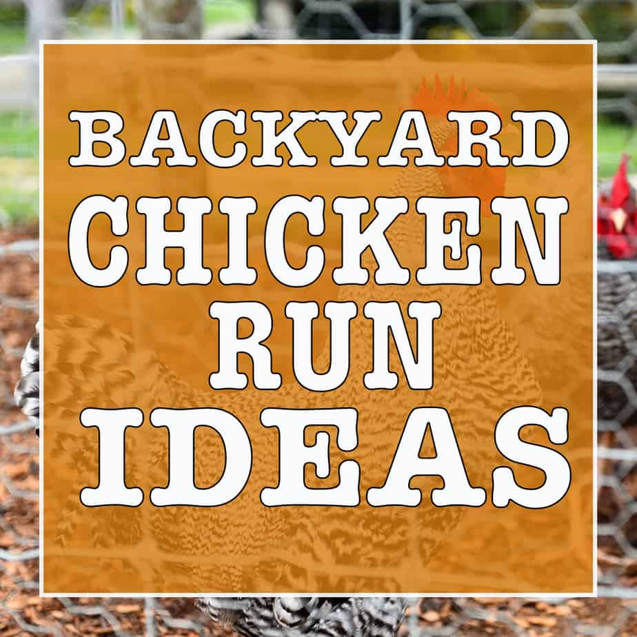 Easy backyard chicken run ideas-