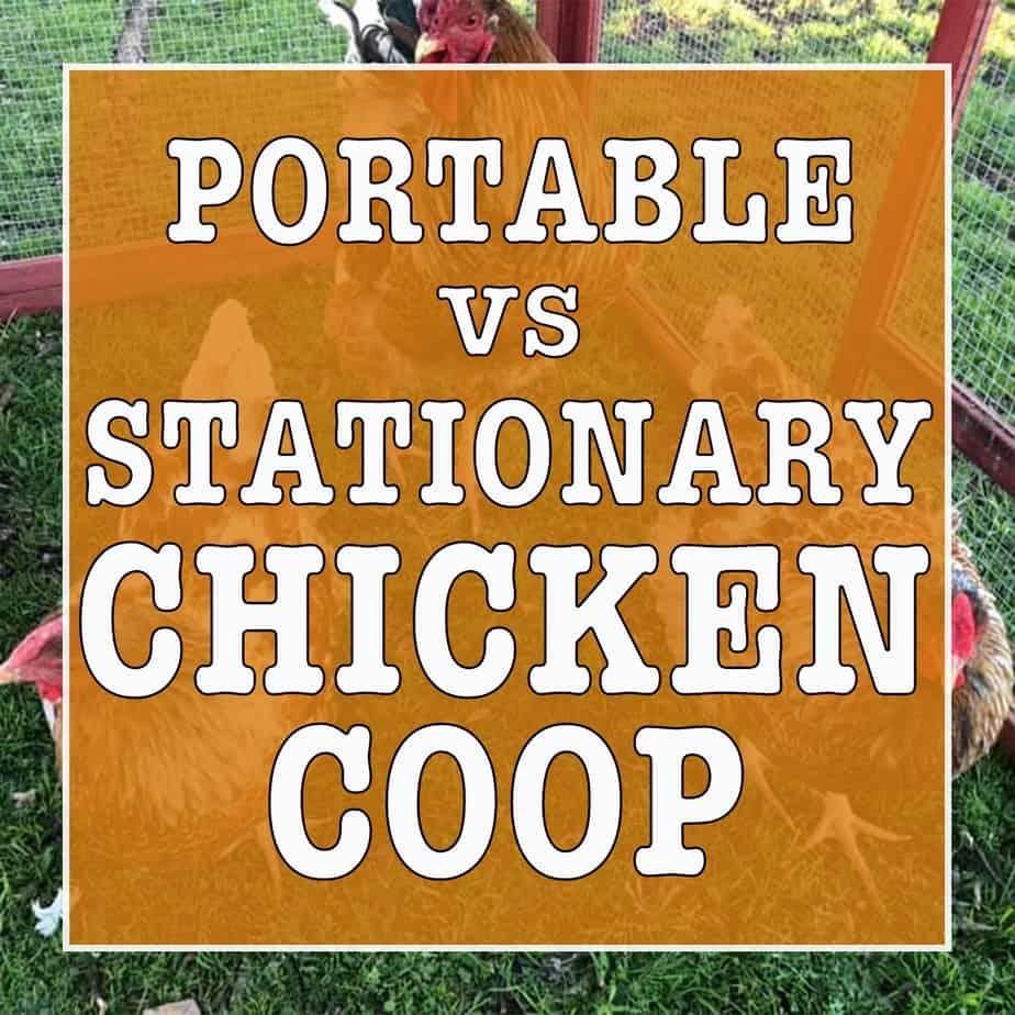 Portable vs stationary chicken coop