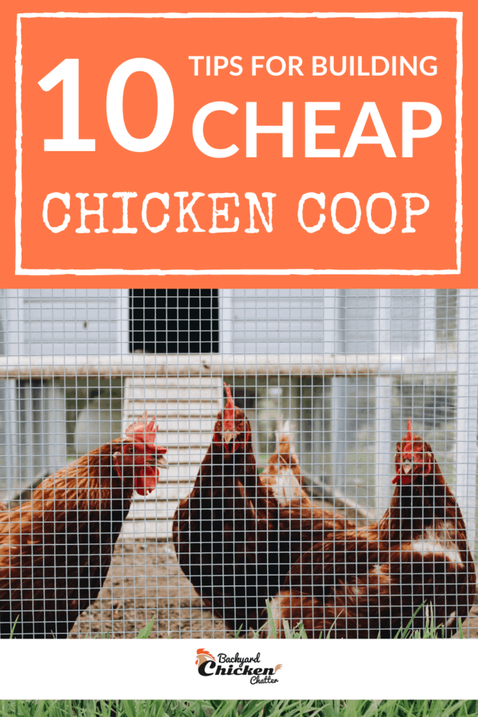 10-TIPS-cheap-chicken-coop