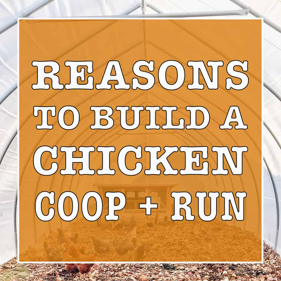 6 Reasons Why A Chicken Coop And Run?