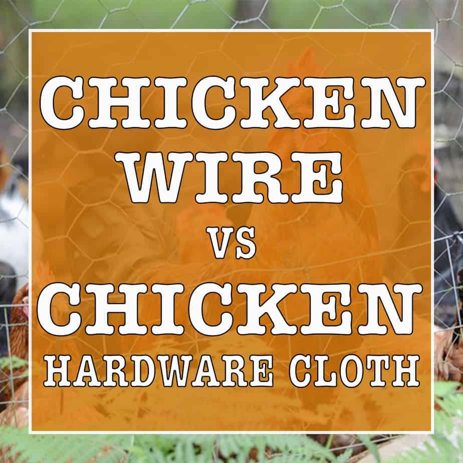Chicken Coop Security: Chicken Wire vs Chicken Hardware Cloth