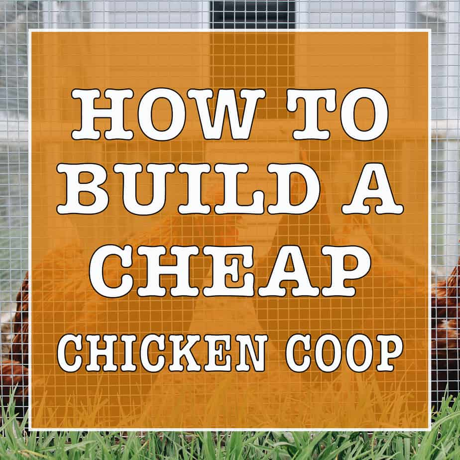 12 Tips How to Build a Chicken Coop Cheap