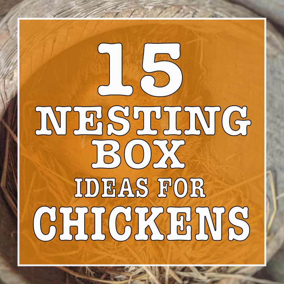 15 Nesting Box Ideas For Chickens
