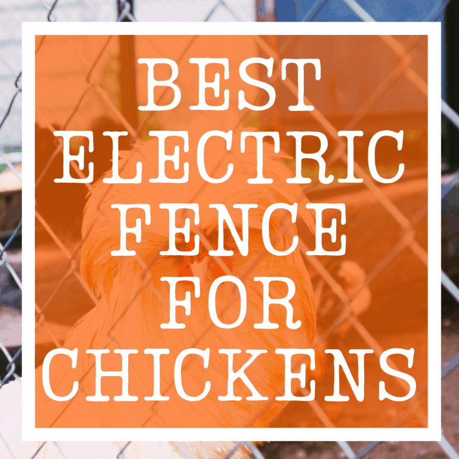 Electric Fence For Chickens cover
