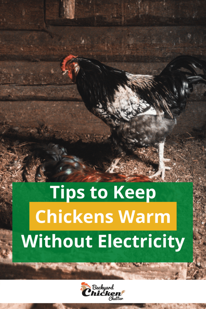 Tips to Keep Chickens Warm Without Electricity-pin