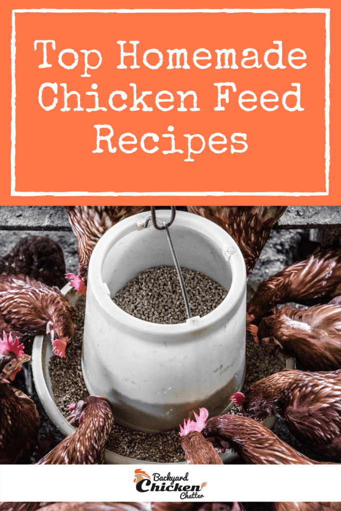 4 Top Homemade Chicken Feed Recipes-pin