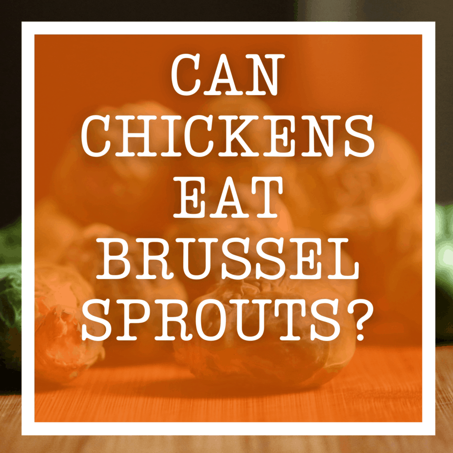 Can Chickens Eat Brussel Sprouts?