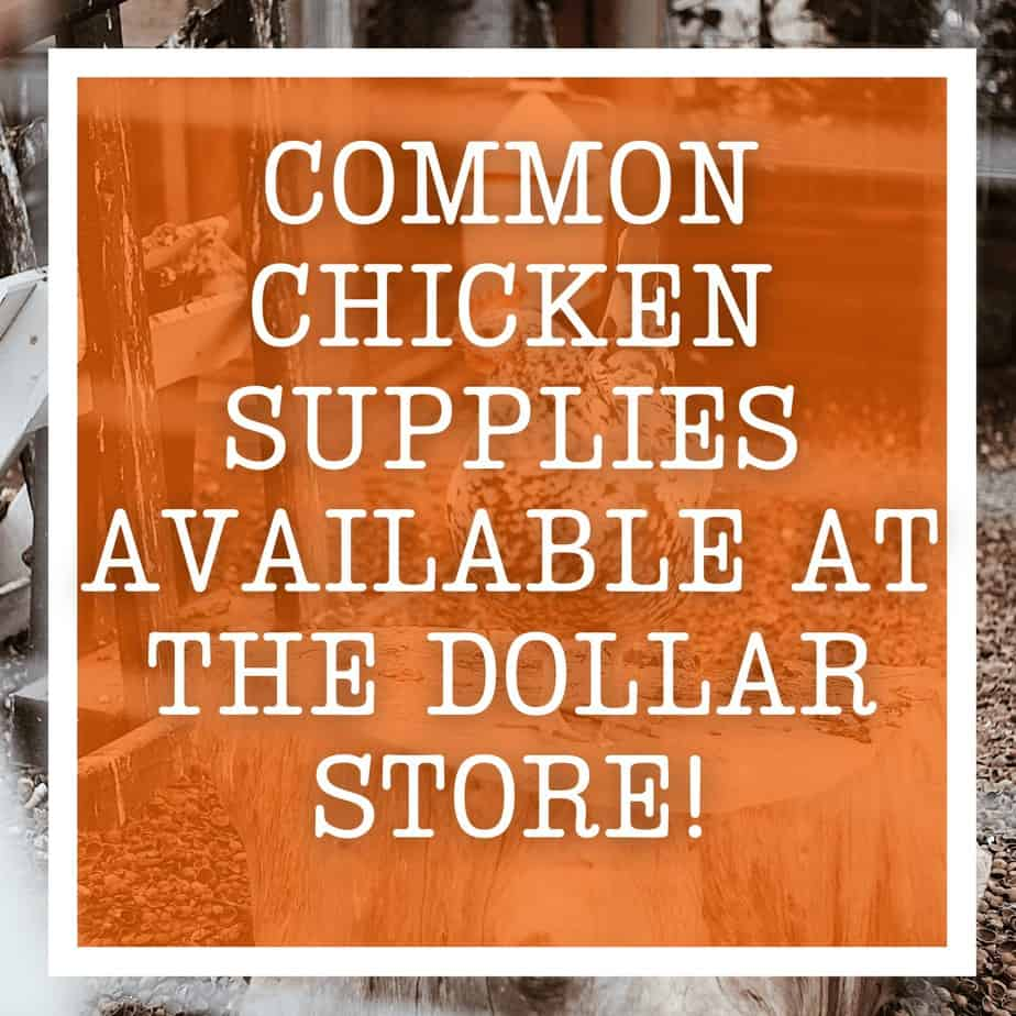 Common Chicken Supplies Available at the Dollar Store!