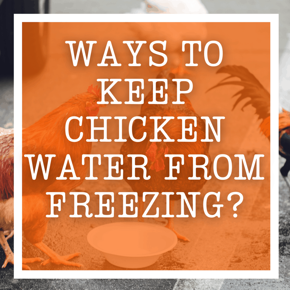 Ways to Keep Chicken Water from Freezing?
